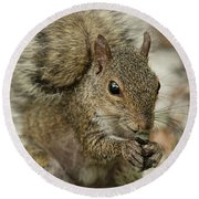 Squirrel And Nuts Round Beach Towel