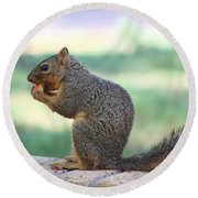 Squirrel Eating Crab Apple Round Beach Towel
