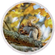 Squirrel In Autumn Round Beach Towel