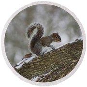 Squirrel In The Snow Round Beach Towel
