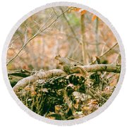 Squirrel In The Woods  Round Beach Towel
