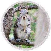 Squirrel Looking At Photographer And Waiting To Be Fed Round Beach Towel