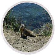 Squirrel Looking Back Over His Shoulder On The Coast Round Beach Towel
