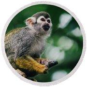 Squirrel Monkey Looking Up Round Beach Towel