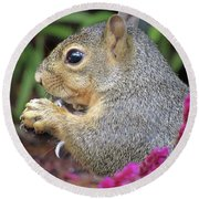 Squirrel - Morning Snack 02 Round Beach Towel