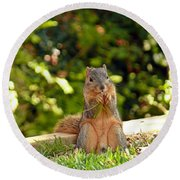 Squirrel On A Log Round Beach Towel