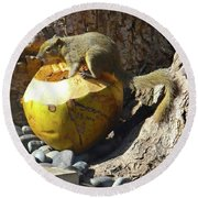 Squirrel On The Coconut Round Beach Towel