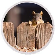 Squirrel On The Fence Round Beach Towel