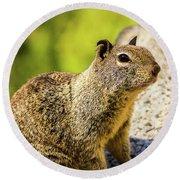 Squirrel On The Rock Round Beach Towel