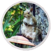 Squirrel Portrait Round Beach Towel