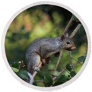 Squirrel Portrait Round Beach Towel