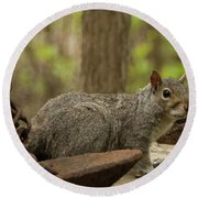 Squirrel With Anchor Round Beach Towel