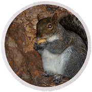 Squirrell Round Beach Towel