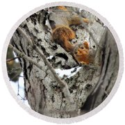 Squirrels At Play Round Beach Towel