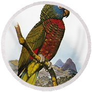 St Lucia Amazon Parrot Round Beach Towel