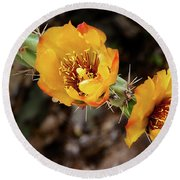 Staghorn Cactus Blossons Round Beach Towel