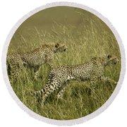 Stalking Cheetahs Round Beach Towel