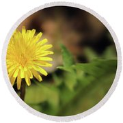 Stand Out - Dandelion Round Beach Towel