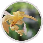 Stanhopea Orchid Round Beach Towel
