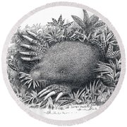 Star-nosed Mole Round Beach Towel