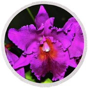 Star Of Bethlehem Orchid 006 Round Beach Towel