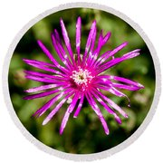 Starburst Of The Wildflowers Round Beach Towel