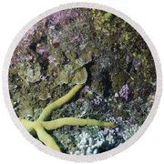 Starfish On A Coral Reef Round Beach Towel