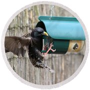 Starling On Bird Feeder Round Beach Towel