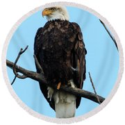 Stately Eagle Round Beach Towel