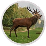 Stately Stag Round Beach Towel