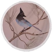 Stellar Jay On Ponderosa Branch Round Beach Towel