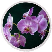Stem Of Orchids  Round Beach Towel