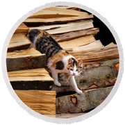 Stepping Down - Calico Cat On Beech Woodpile Round Beach Towel