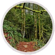 Sticking Out In The Rain Forest Round Beach Towel