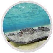 Stingrays Under Water Round Beach Towel
