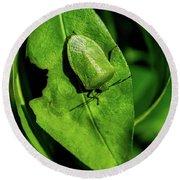Stink Bug On Leaf Round Beach Towel