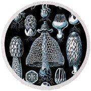 Stinkhorn Mushrooms Vintage Illustration Round Beach Towel