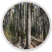 Storm Point Trail Forest Round Beach Towel