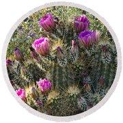 Strawberry Hedgehog Cactus  Round Beach Towel
