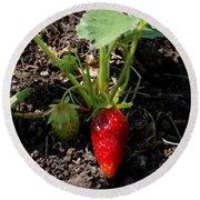 Strawberry Plant Round Beach Towel