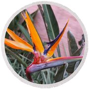 Strelitzia Double Bloom Round Beach Towel