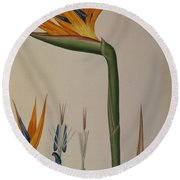 Strelitzia Reginae Round Beach Towel by Pierre Joseph Redoute