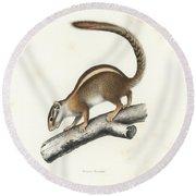 Striped Bush Squirrel, Paraxerus Flavovittis Round Beach Towel