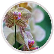Striped Orchid 1 Round Beach Towel