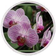 Striped Orchids With Border Round Beach Towel