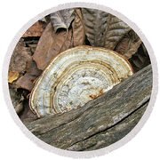 Striped Shelf Fungus - Basidiomycota Round Beach Towel