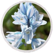 Striped Squill Emerging Round Beach Towel