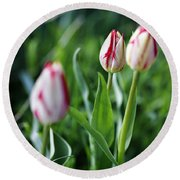 Striped Tulips In Spring Round Beach Towel