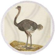 Struisvogel, Anonymous, 1560 - 1585 Round Beach Towel