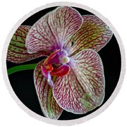 Study Of An Orchid 2 Round Beach Towel